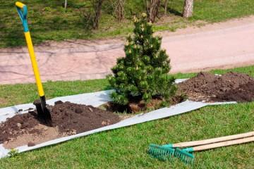 Tree Planting, Maintenance & Removal