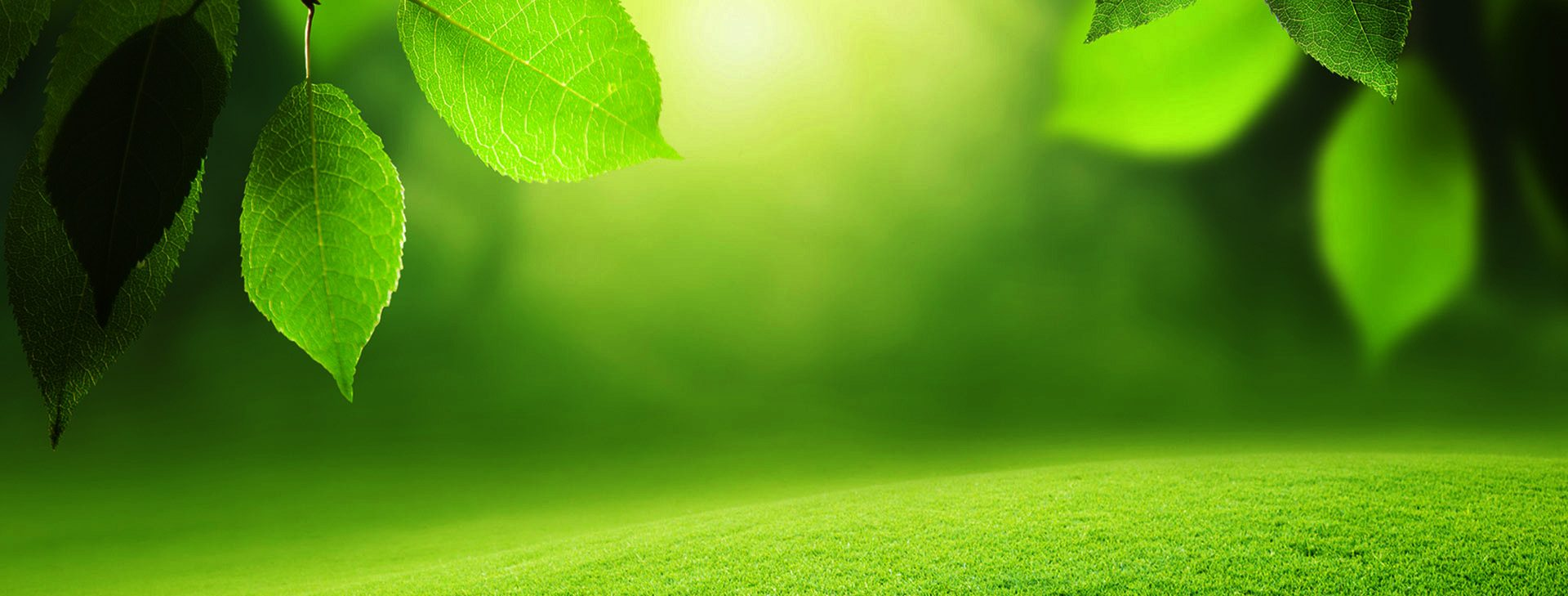 Professional Lawn Care & Landscaping Services